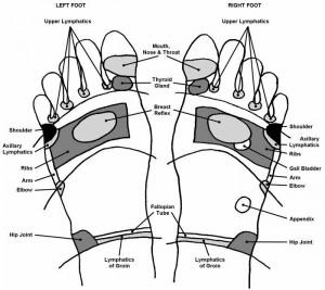 Reflexology chart- top of the feet